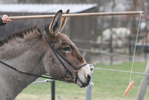 Donkey Carrot