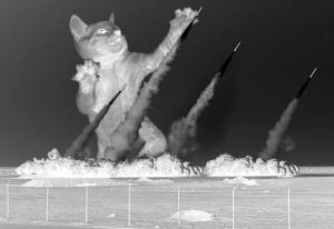 MissileDefenseCat